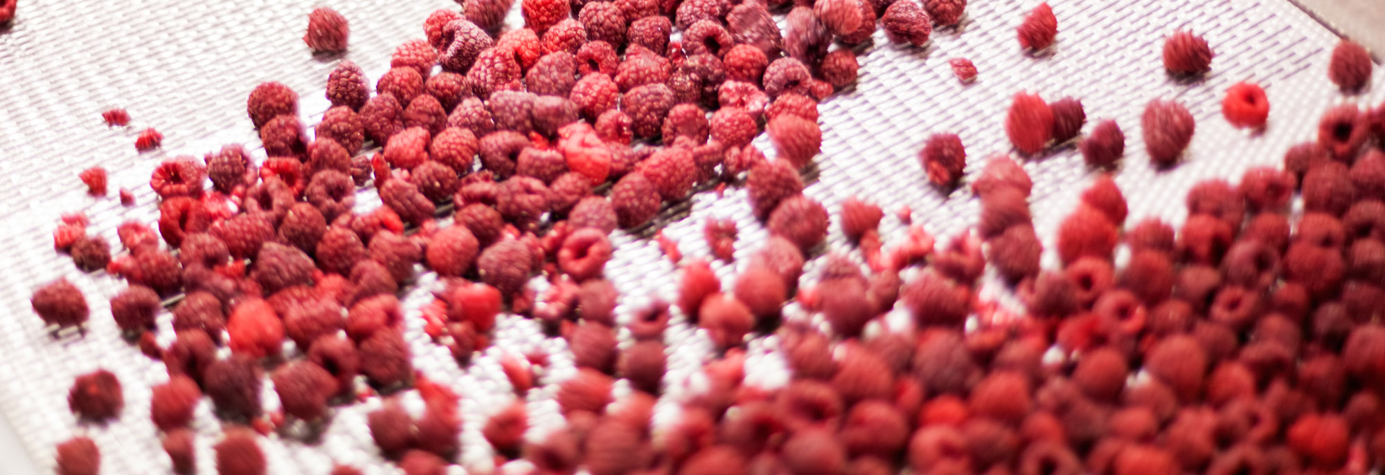 frozen-fruit_processing_machines